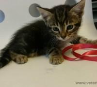 20529-kosuyolu-pet-veteriner-klinigi-239
