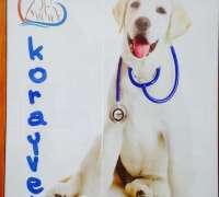 koray-veteriner-klinigi-43
