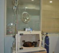 20557-sekerci-veteriner-klinigi-698