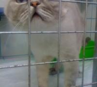 20579-green-pet-veteriner-klinigi-23