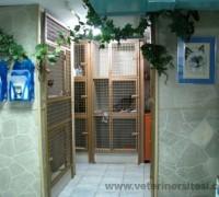 20584-istanbul-veteriner-klinigi-960