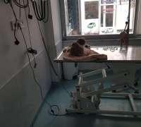mahmutlar-veteriner-klinigi-474