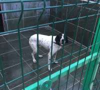 mahmutlar-veteriner-klinigi-575
