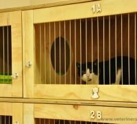 20589-beyaz-pati-veteriner-klinigi-487