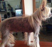 kemer-veteriner-klinigi-915