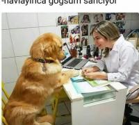 20698-topkapi-yasam-veteriner-klinigi-927