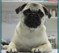 20700-cizmeli-kedi-veteriner-klinigi-883
