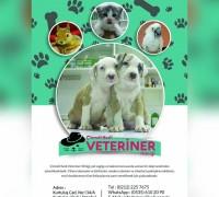 20709-cizmeli-kedi-veteriner-klinigi-399