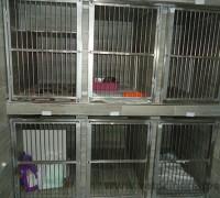 20733-yenibosna-veteriner-klinigi-609