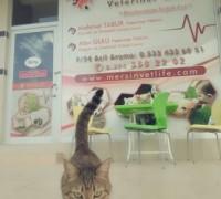 20750-mersin-vetlife-veteriner-klinigi-420