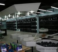 20807-lale-akvaryum-market-42