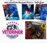 20826-atakent-veteriner-klinigi-816