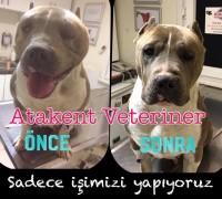 20830-atakent-veteriner-klinigi-632