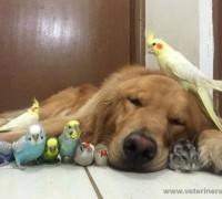 20957-zooland-pet-shop-988
