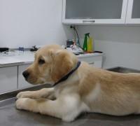21120-ilgi-veteriner-klinigi-908
