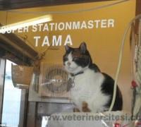 21161-ametist-veteriner-klinigi-751