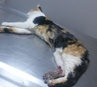 21188-egem-veteriner-klinigi-17