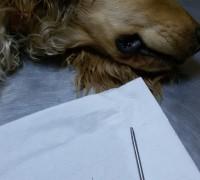 21198-egem-veteriner-klinigi-929