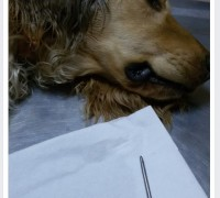 21199-egem-veteriner-klinigi-461