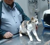 21200-egem-veteriner-klinigi-476