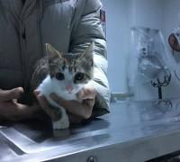 21223-egem-veteriner-klinigi-843