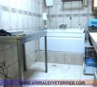 21269-animales-veteriner-klinigi-613