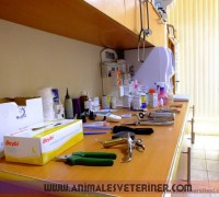 21271-animales-veteriner-klinigi-918