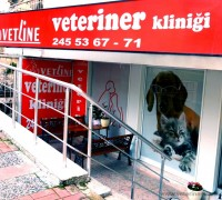 21336-vetline-veteriner-klinigi-36