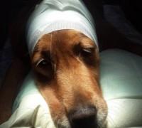 21453-medicapet-veteriner-klinigi-811