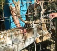 21457-medicapet-veteriner-klinigi-568