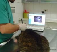 21470-medicapet-veteriner-klinigi-295