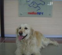 21476-medicapet-veteriner-klinigi-49