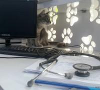 21520-adana-lotus-veteriner-klinigi-439