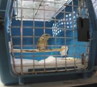 21567-elif-veteriner-klinigi-452