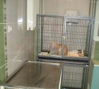 21599-batikent-veteriner-muayenehanesi-208