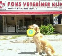 21747-foks-veteriner-klinigi-538
