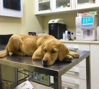 21750-foks-veteriner-klinigi-746