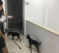 21790-alis-veteriner-klinigi-712