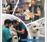 21800-asya-veteriner-klinigi-574
