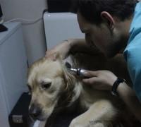 21831-pet-stop-veteriner-muayenehanesi-156