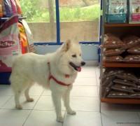 21888-mecidiyekoy-veteriner-klinigi-988