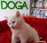 21901-doga-veteriner-muayenehanesi-39