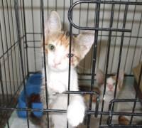 21903-cagdas-veteriner-klinigi-957