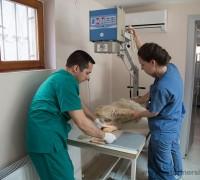 21921-guven-veteriner-klinigi-562