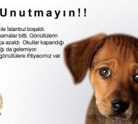 21927-fatih-belediyesi-yedikule-hayvan-barinagi-19
