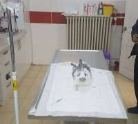 angora-veteriner-klinigi-176