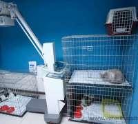 myvet-veteriner-klinigi-850