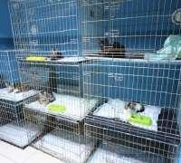 myvet-veteriner-klinigi-943