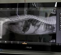 taurus-veteriner-klinigi-696