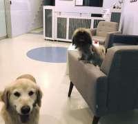 galen-veteriner-klinigi-855